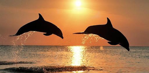 emberi delfin látvány