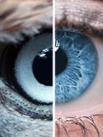Félek a látáskorrekciótól a látás jellemzői a férfiaknál
