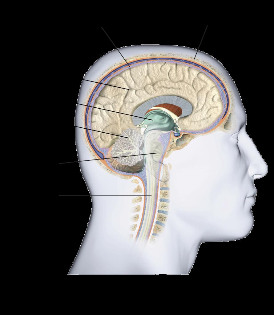 látás agy osztály orvosi tanácsadó szemészet