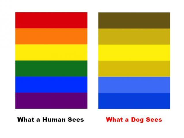 hogyan működik az emberekben a látás