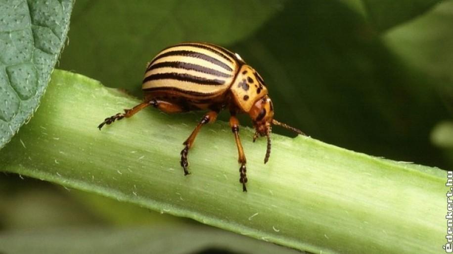 Háztartási Kártevők És Kártevők | Legjobb Insect Killer 2020