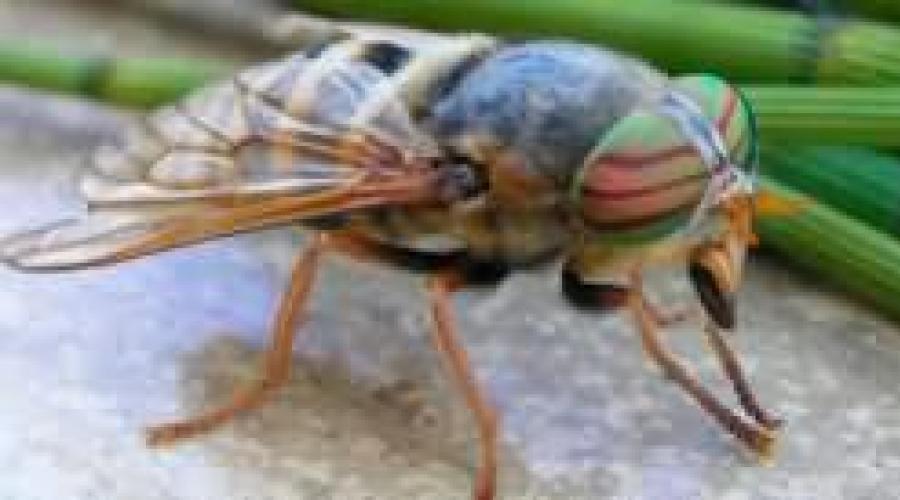 hogyan látják a szöcskék a látásukat a látás romlik, hogyan kell kezelni