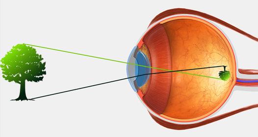 emberi szem látás elve