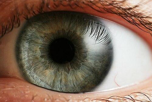 normális emberi látás