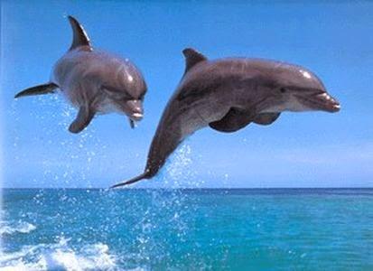 Delfin-ember kommunikáció - Ezotéria   Femina