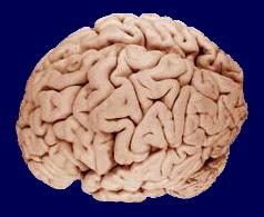 látás agy táplálkozás