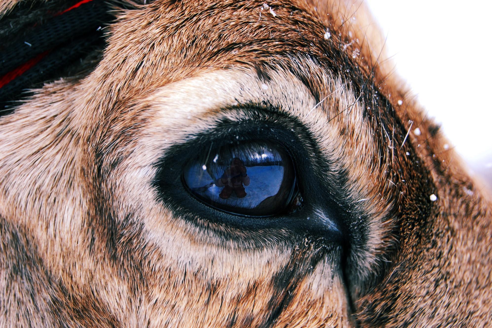 a szemek fájnak