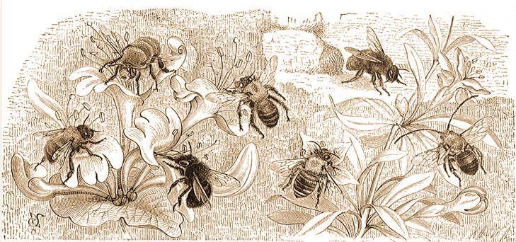 méhkenyér a látás kedvéért