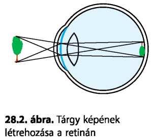 rövidlátás és asztigmatizmus mindkét szemében normális látás deuteranopia