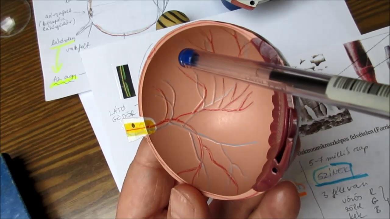 Az igaz hogy a maszturbáció látás károsodást okoz vagy totál hülyeség?