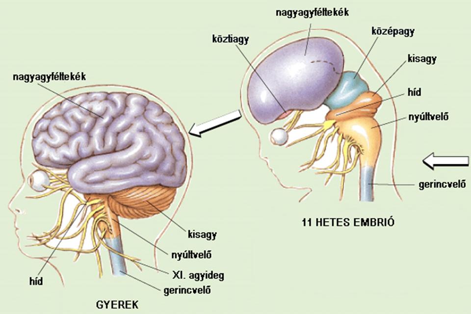 Ataxia - Neurológiai Központ