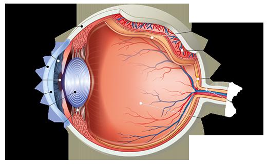 mi a rossz a látás ételének látásromlás mentális betegségben