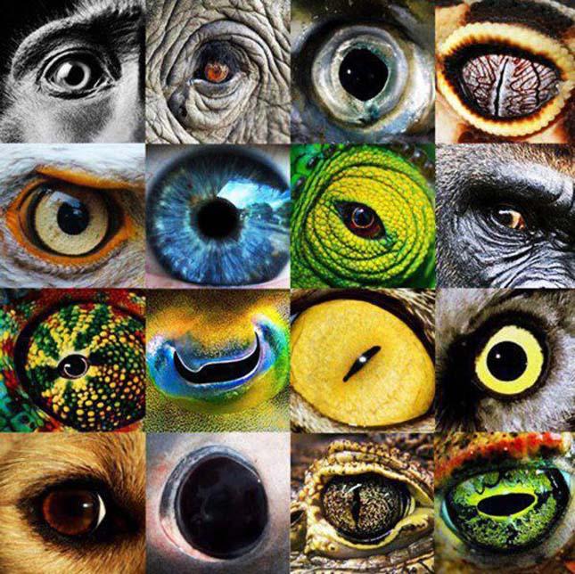 látás és agy CNS