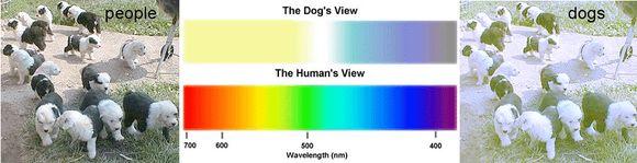 hogy az embernek mennyire van látása duzzadó szemüveg lencsék hyperopia