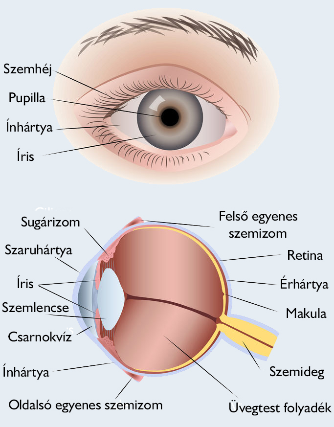 myopia az öregségi látásban
