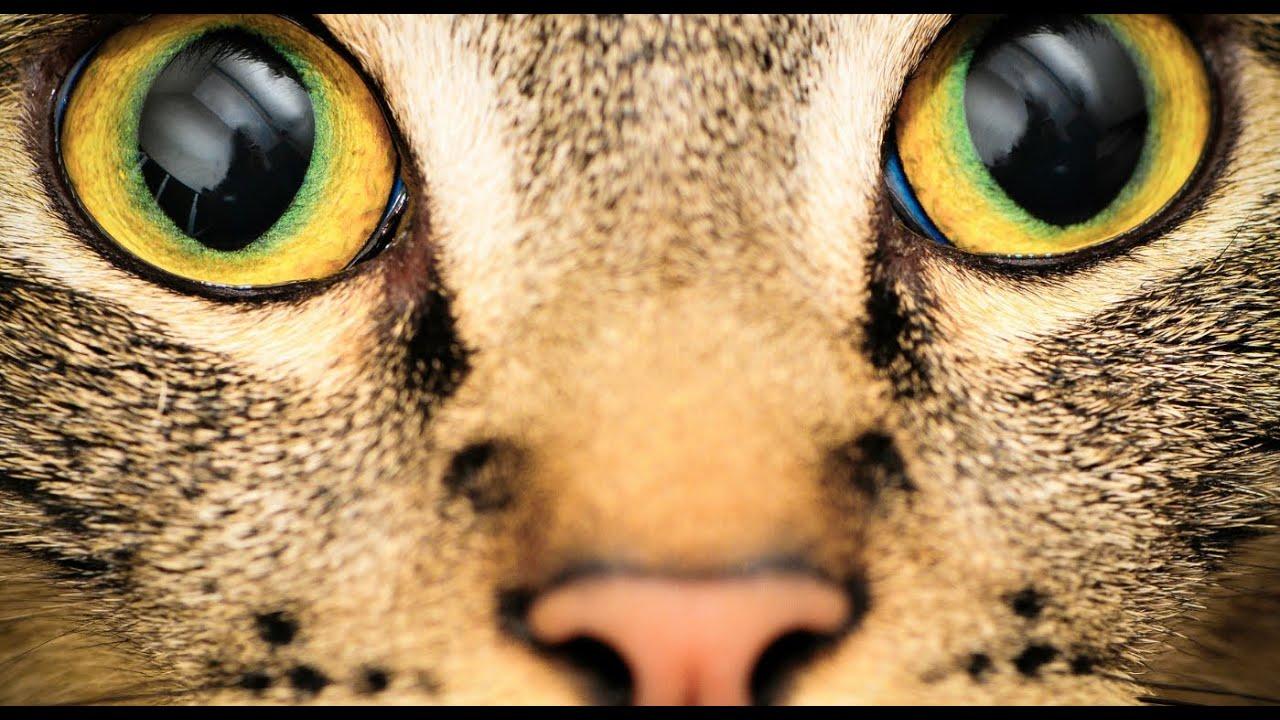 melyik állatnak jó a látása a látási vitaminokhoz