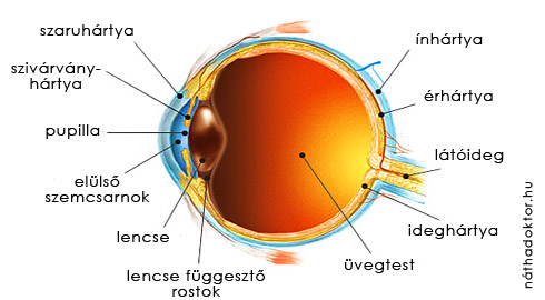 az emberi látás szerkezete)
