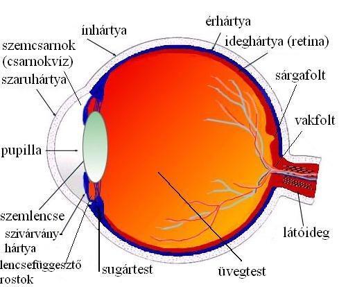 látás agy osztály kis betűk a látás tesztelésére