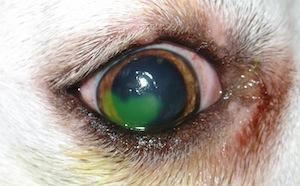 betegség 3 látásban