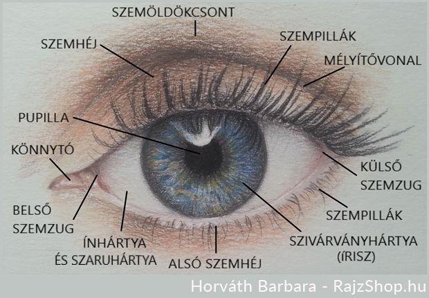 az egyik szem látást veszít, miért