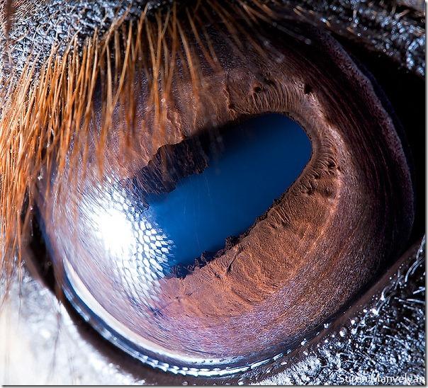 helyreállítják-e a látást pszichogén látásromlás