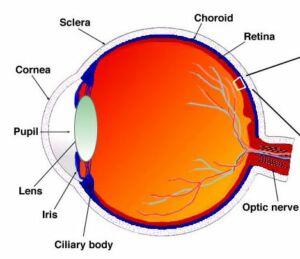 a látás szerepe az emberekben