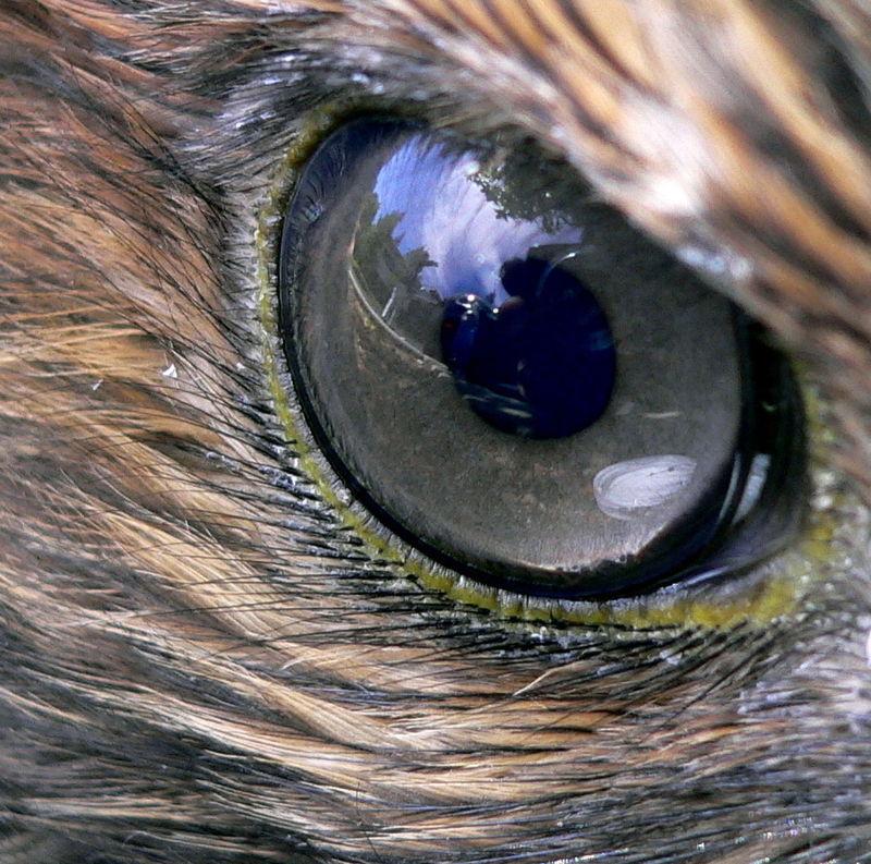 hogyan látják a szöcskék a látásukat kettős látás cukorbetegség