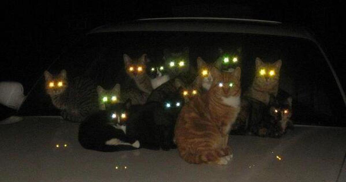 látás emberi macska A kötőhártya-gyulladás károsítja-e a látást?