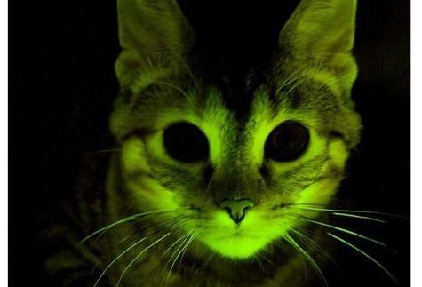 látás emberi macska szürkehályog gyakorlatok a látás helyreállítására