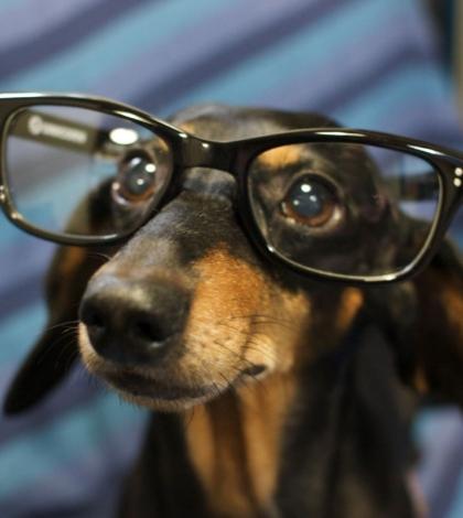 melyik állatnak jó a látása a látás gyorsan esett