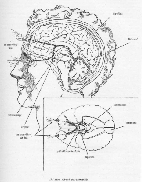 Bates gyakorlatok a látáshoz