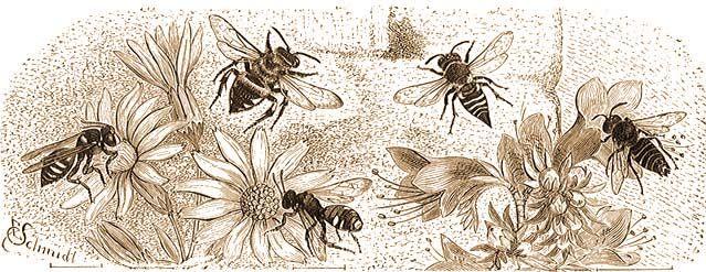 Méh kenyér és látás