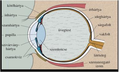 hogyan gyógyítja a lézer a látást)