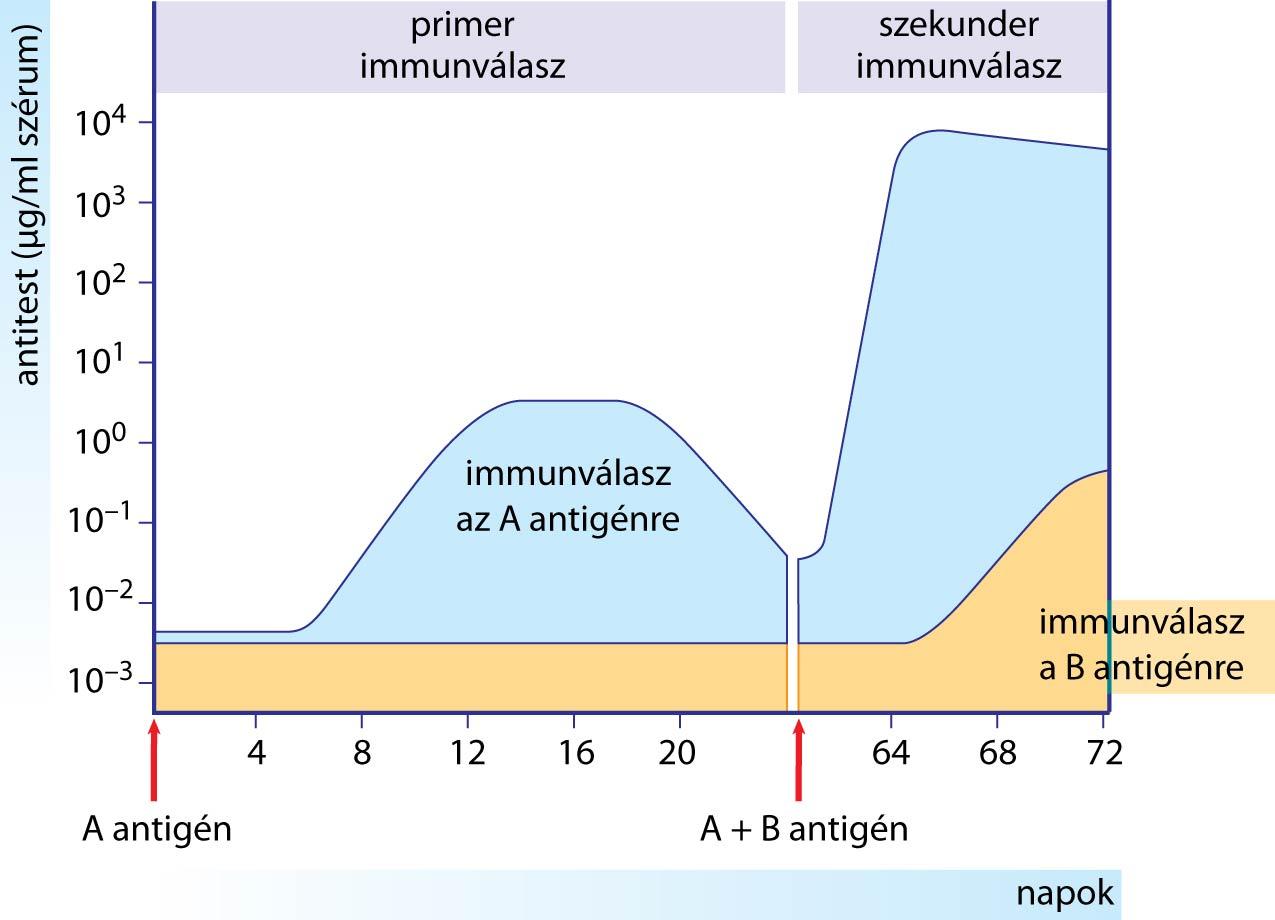 Immunissá válnak a COVID betegek? | Magyar Iskola | Köszönjük a megosztást!