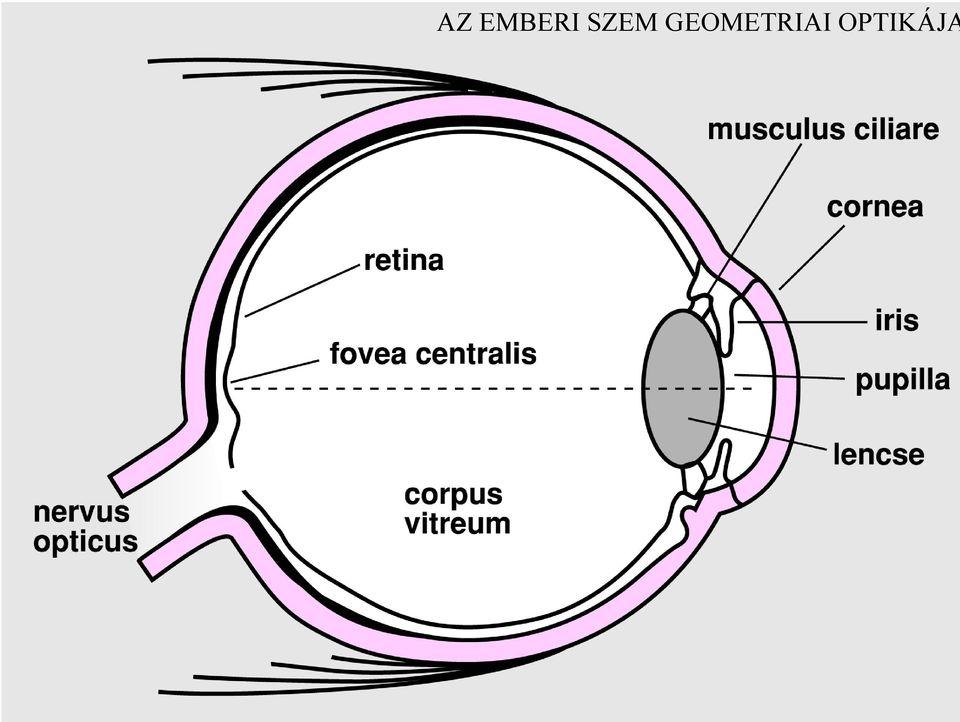 Milyen egységekben mérik az emberi látást - berekinyaralas.hu