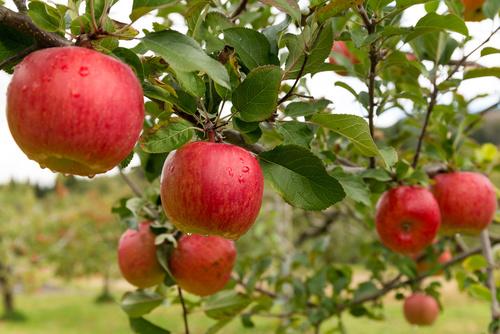Gyümölcsök, amelyek erősítik a látást Milyen gyümölcsök és zöldségek láthatók a látásra? - Édesség