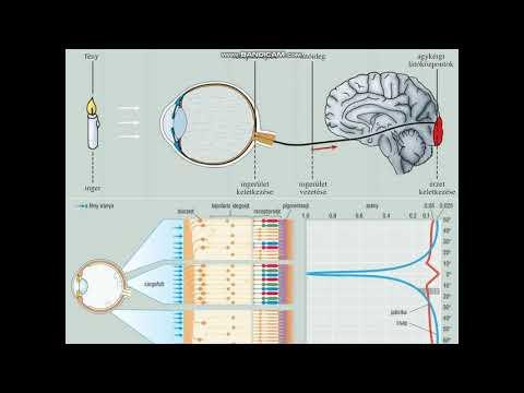 Szemvizsgálat. Látás látás vizsga diagram — Stock Kép