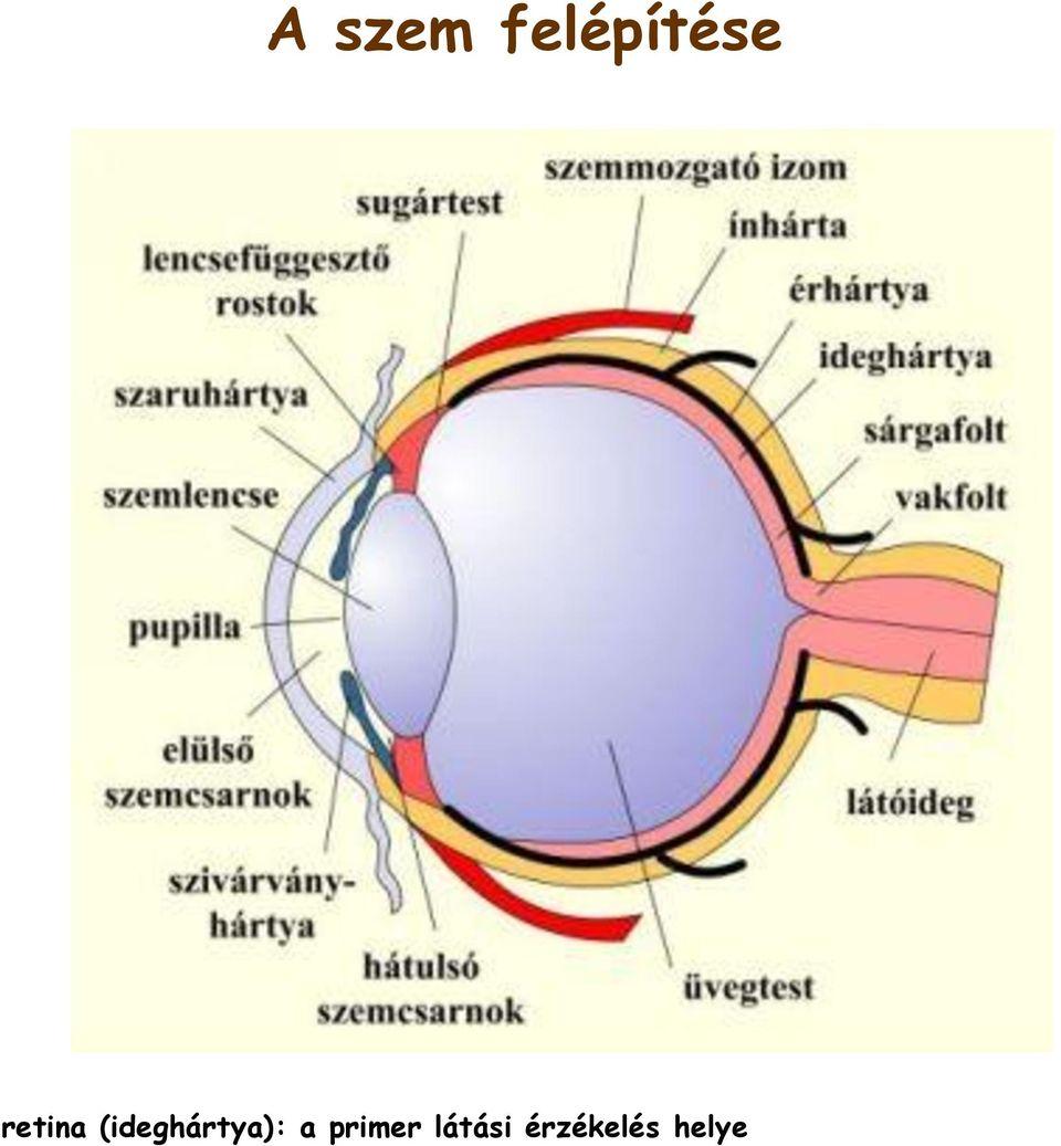 Gyenge látás szülni. Szülés utáni problémák, amelyekről érdemes tudni