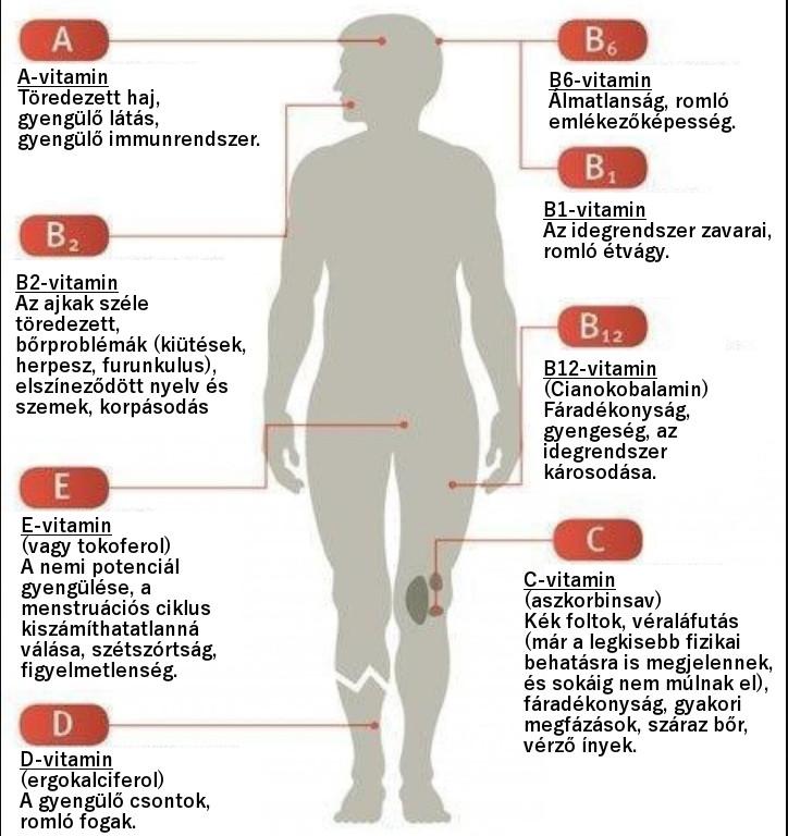 b6-vitamin és látás