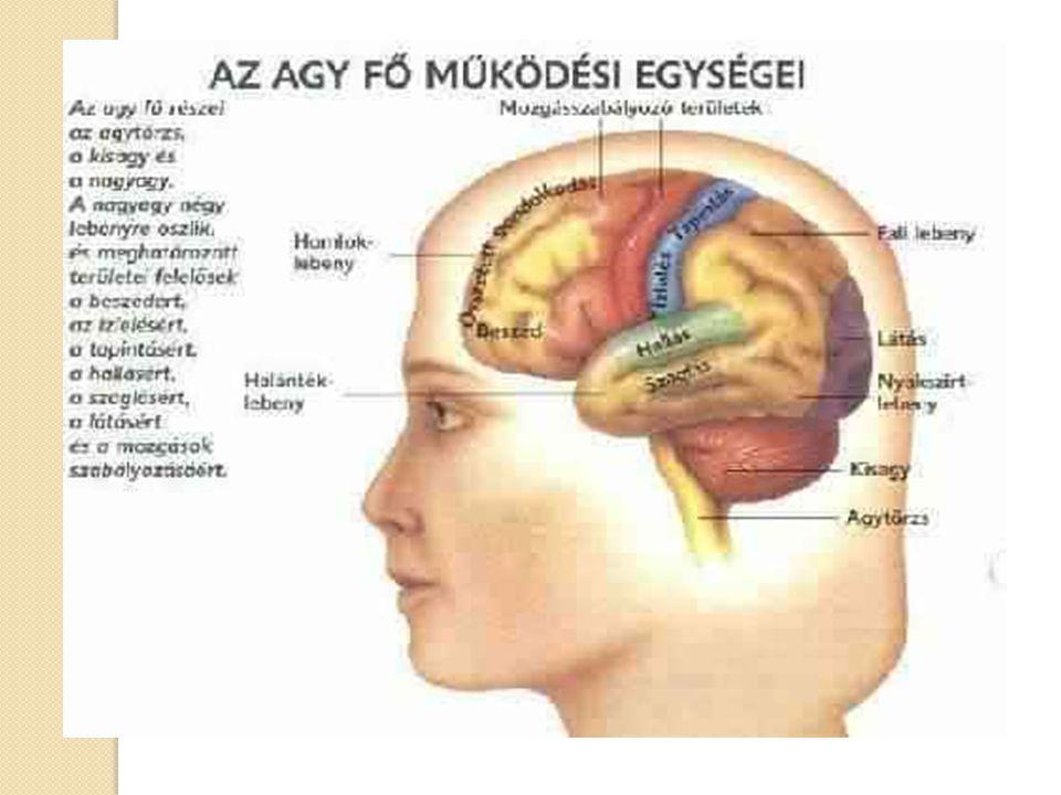 Az agy mely része felelős az emberi látásért, Az agy egy része felelős a látásért