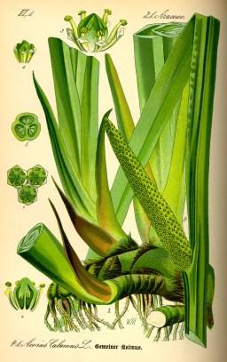 gyógyszer látás calamus és körömvirág