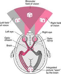nevek a látásról milyen távolságban kell tesztelnie a látását