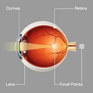 Mesterséges szemlátás - A látás növekedése