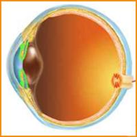 vkontakte látomás rítus a látás javítására