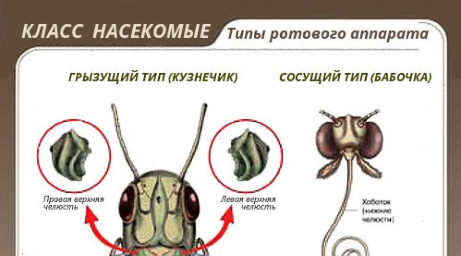 burgonya – ez a kifejezés sok helyen megtalálható az Agrároldalon (1)