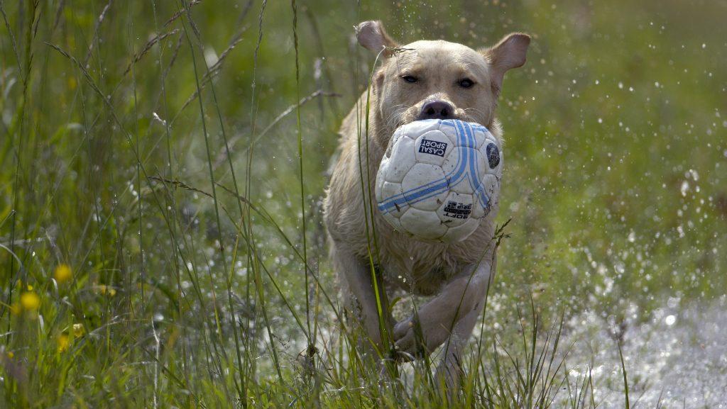 Az Én Kutyám - Hogyan látnak a kutyák? Súlyos tévhit, hogy nem észlelik a színeket