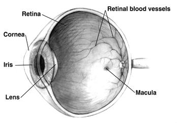 Zöldhályog tünetei, kezelése és okai (glaucoma)