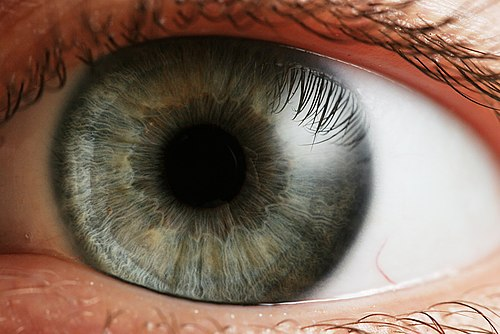 mit jelent a jó látás
