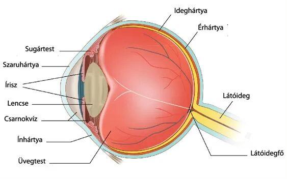 a szem és a látás témájában csepp látás